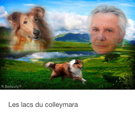colley3