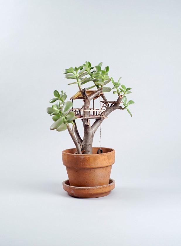 plante-cabane-interieur-05-618x840